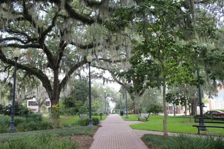 Image of Sidewalk and Canopy trees